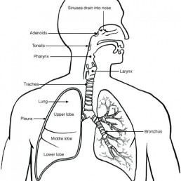 Did you know? Physiotherapists can help with respiratory issues 1
