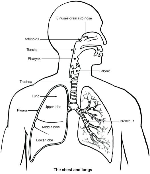 Respiratory issues? Physio can help! 1