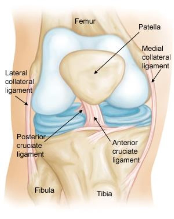 ACL Injury & Treatment 1